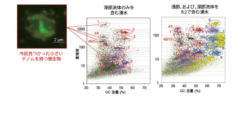 図表 深部及び浅部流体を含む「ザ・シダーズ」蛇紋岩体湧水に生息する微生物群のゲノム解析