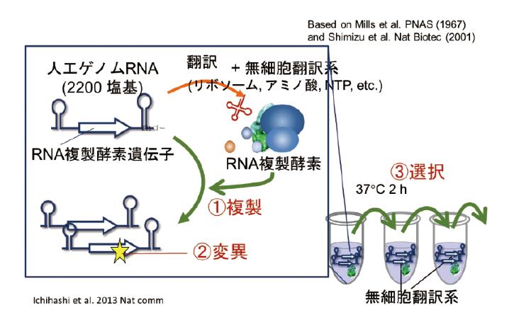 図表1 進化する自己複製システム